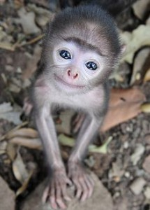 baby monkey smiling and happy